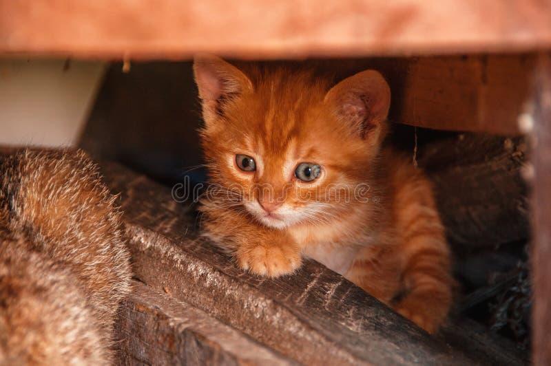 Couros crus vermelhos pequenos do gatinho sob os logs Gatos desabrigados Gato disperso imagens de stock