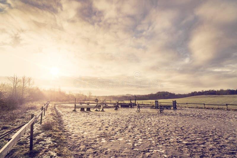 Cours équestre de cheval du lever de soleil de matin image stock
