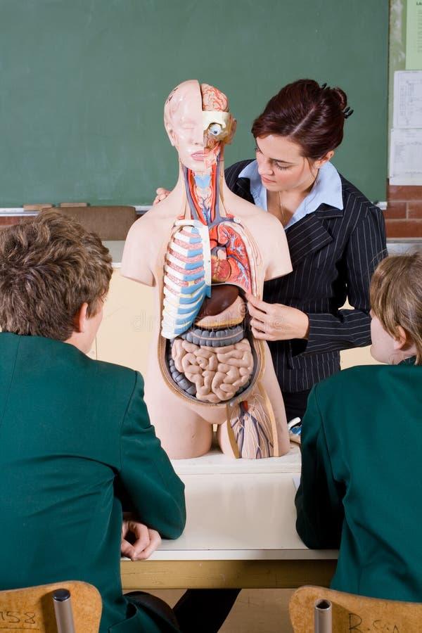 Cours de Biologie photo stock