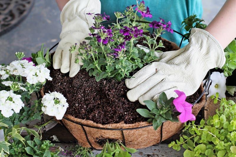 Cours de fille plantant un panier accrochant des fleurs photo stock