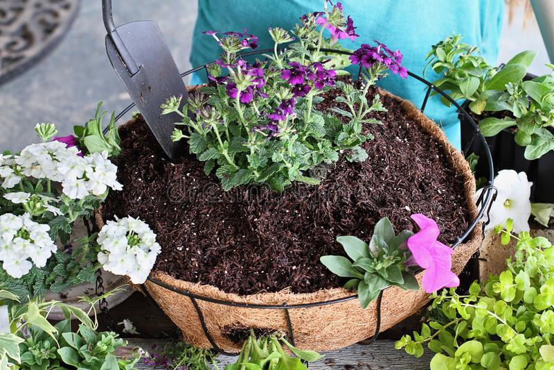 Cours de planter un panier accrochant des fleurs image libre de droits