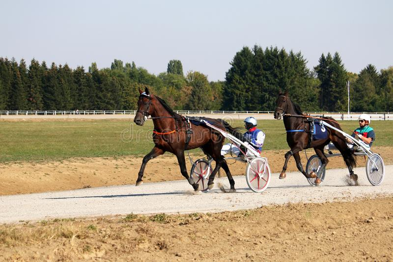 Course d'attelages de jockeys et de chevaux photos stock