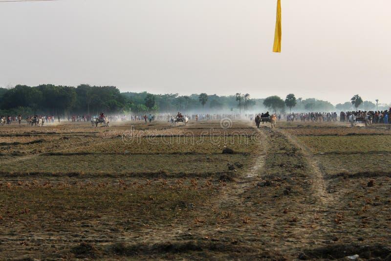 Course de chariot de Bullock image stock