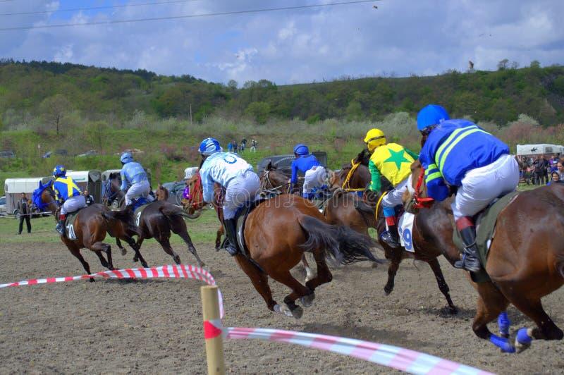 Course de cheval photographie stock libre de droits