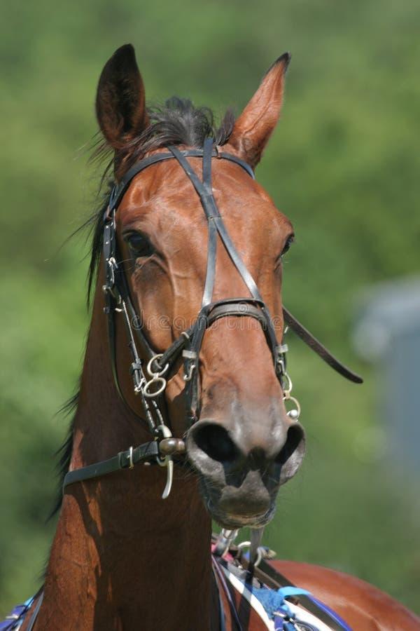 Course de chevaux 2 images libres de droits