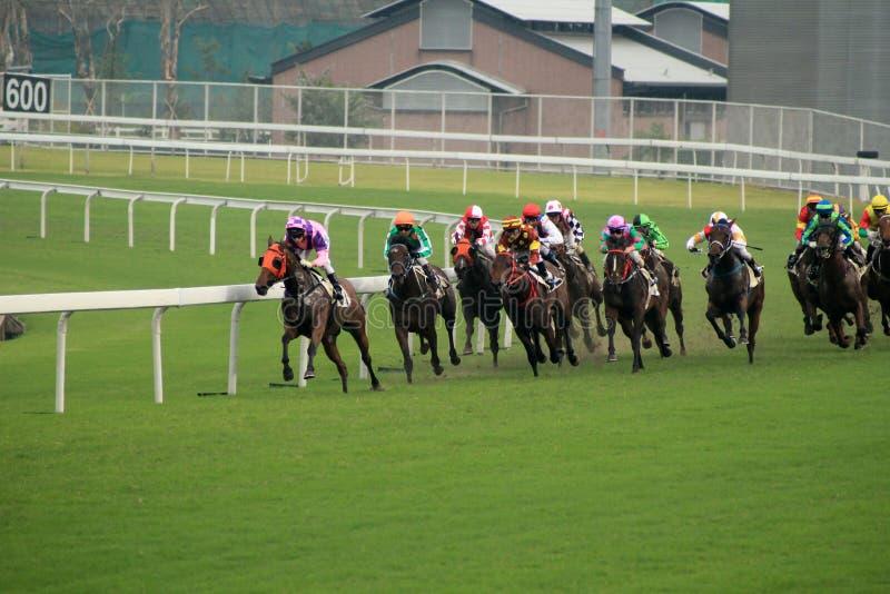 Course de chevaux images libres de droits