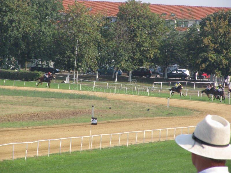 Course de chevaux en Serbie photographie stock libre de droits