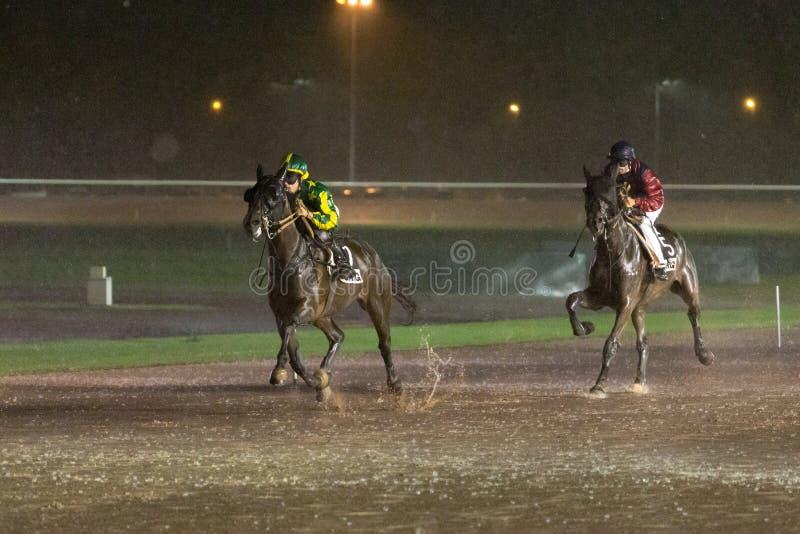 Course de chevaux sur un hippodrome pluvieux images libres de droits