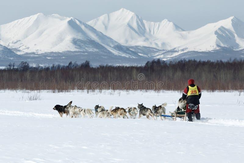 Course de chien de traîneau traditionnelle du Kamtchatka Beringia photographie stock libre de droits