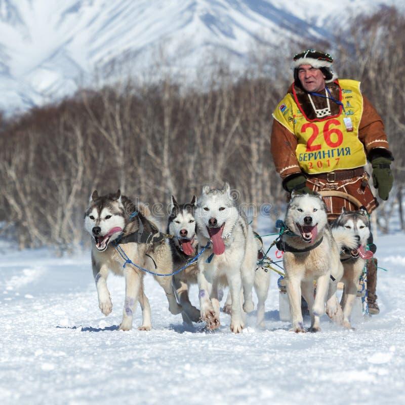 Course de chien de traîneau du Kamtchatka Beringiya, tasse de la Russie des disciplines de neige de traîneau de chien photographie stock libre de droits