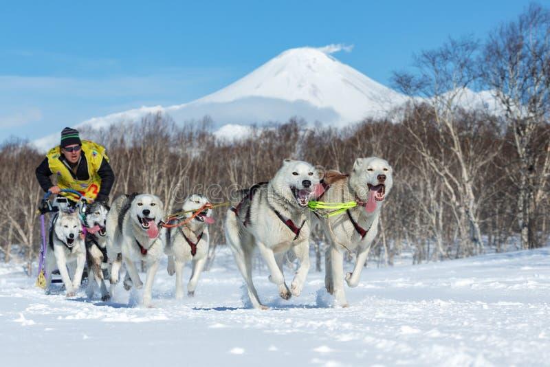 Course de chien de traîneau du Kamtchatka Beringiya, tasse russe de disciplines de neige de traîneau de chien photographie stock