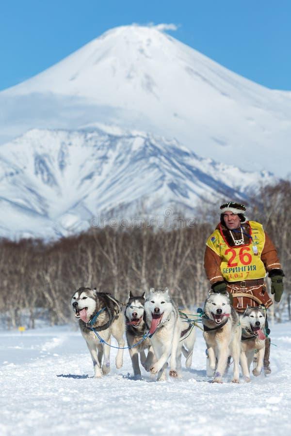 Course de chien de traîneau de péninsule de Kamchatka, tasse russe de disciplines de neige de traîneau de chien image stock