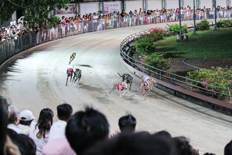 Course de lévrier au Vietnam photographie stock libre de droits