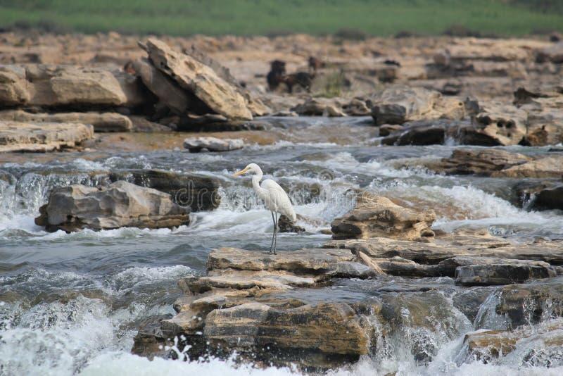Course de l'eau photographie stock libre de droits