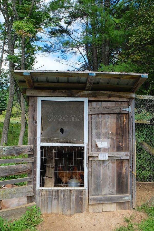 Course de poulet photographie stock libre de droits