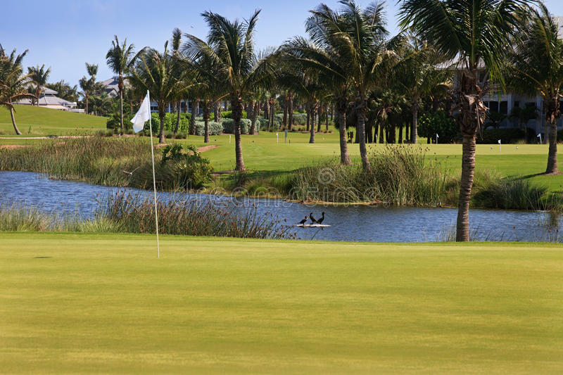 course florida golf arkivbilder