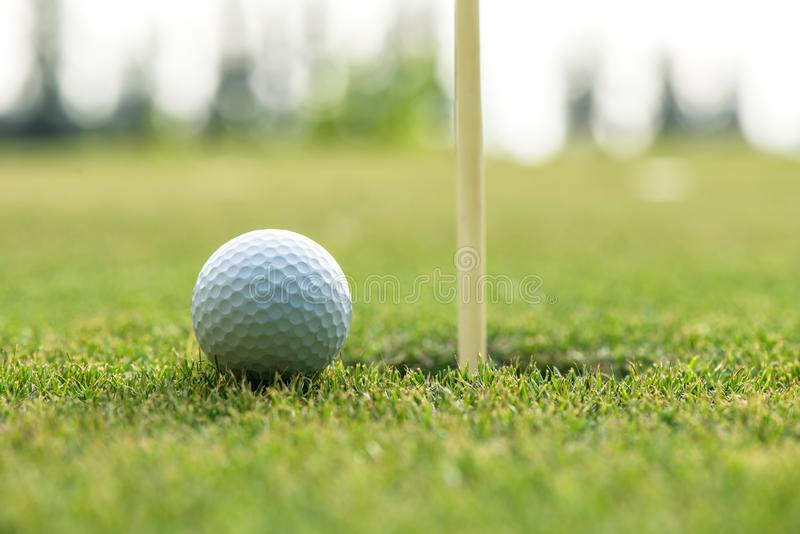 Course Golf ball cub on the green near hole for Family day. stock image