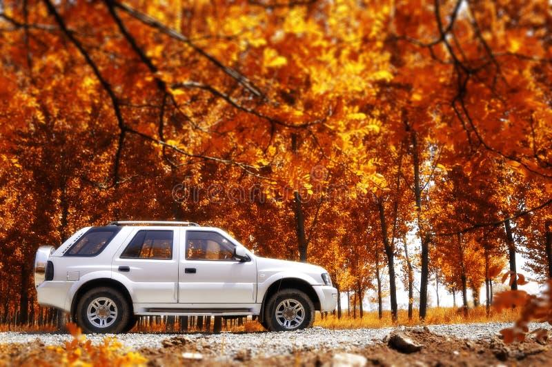 Course rurale en automne images libres de droits