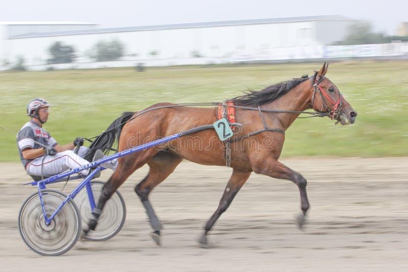 Courses de cheval photographie stock libre de droits