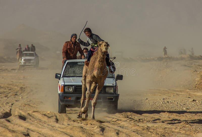 Courses des chameaux en Egypte photographie stock libre de droits
