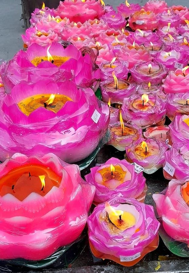Courson de lotus de Lit image libre de droits