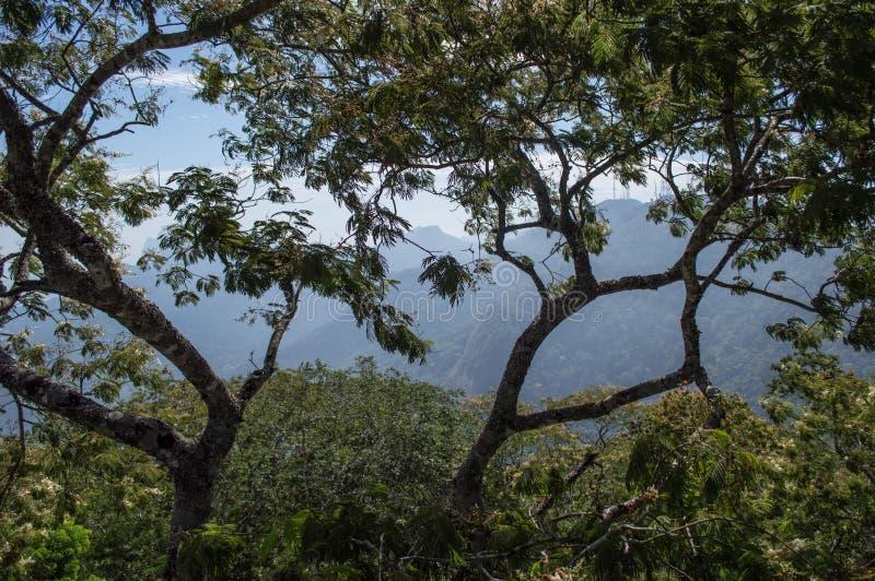 Courtain d'arbre sur Corcovado photographie stock libre de droits