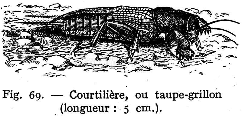 Courtilière Free Public Domain Cc0 Image