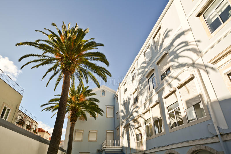 Courtyard with palm trees in historical Bairro Alto quarter, Lisbon Portugal stock photos