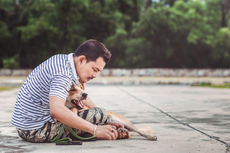 Coutil de puce de découverte d'homme de mains sur les cheveux de peau de chien photos stock