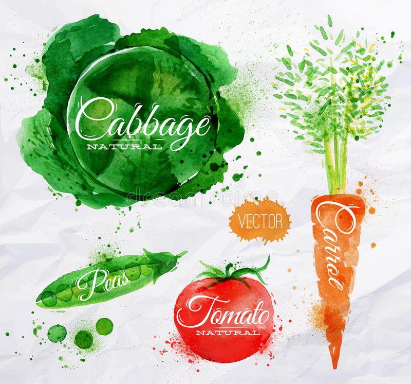 Couve da aquarela dos vegetais, cenoura, tomate, ilustração stock