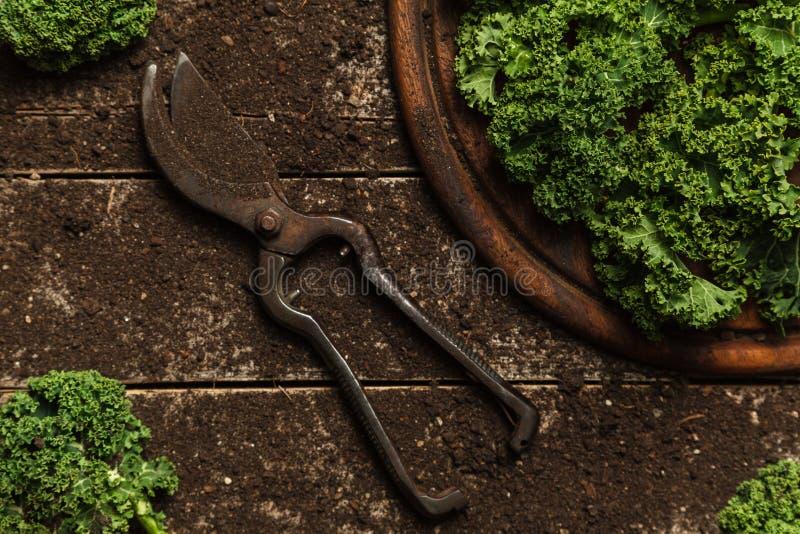 Couve orgânica em uma tabela de madeira velha do solo fotos de stock royalty free