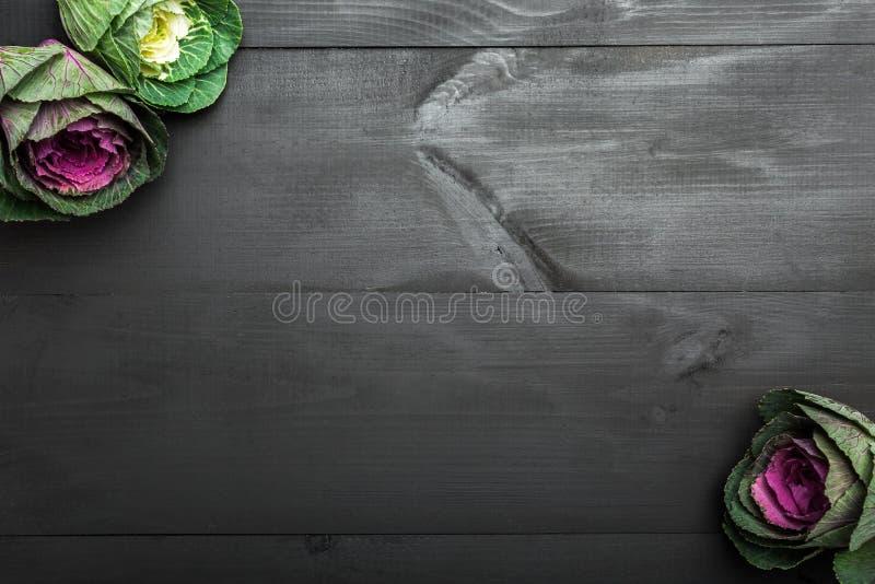Couve roxa decorativa, couve da flor no fundo de madeira com espaço da cópia Plantas decorativas, vegetais fotos de stock