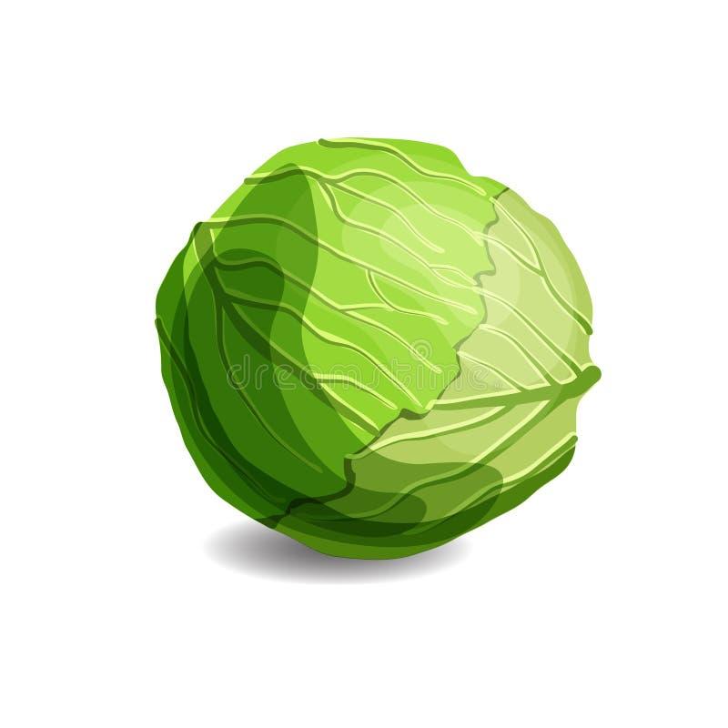 Couve verde suculenta fresca isolada no fundo branco Comer saudável, alimento do vegetariano ilustração do vetor