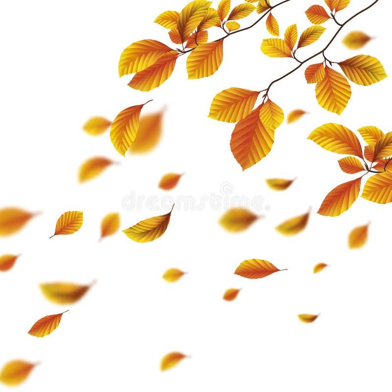 Couverture d'Autumn Foliage Fall Beech White illustration libre de droits