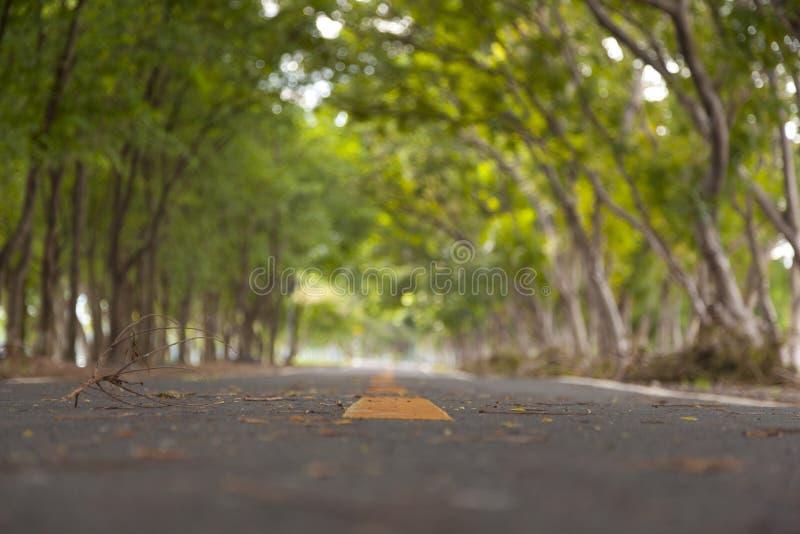 Couverture de route avec l'arbre photo stock
