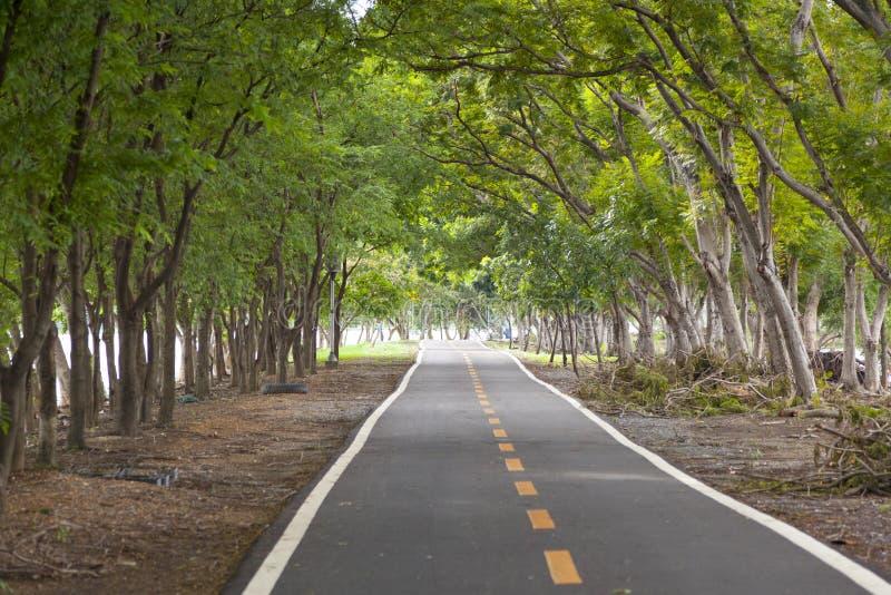 Couverture de route avec l'arbre photos libres de droits