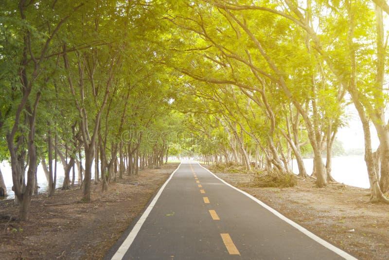 Couverture de route avec l'arbre images stock