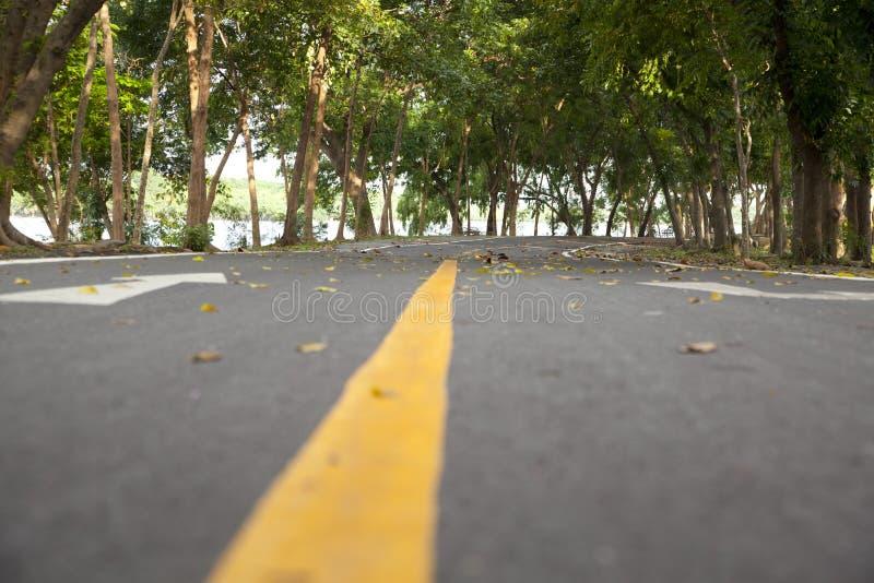 Couverture de route avec l'arbre photographie stock libre de droits
