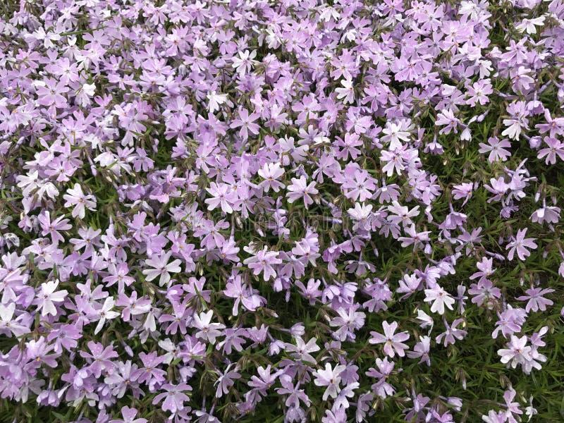 Couverture des fleurs images stock