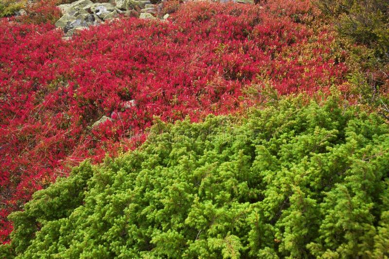 Couverture pittoresque d'automne dans les montagnes photos libres de droits