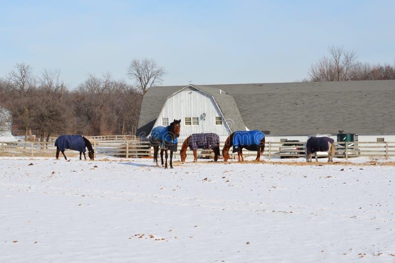 couvre des chevaux image libre de droits