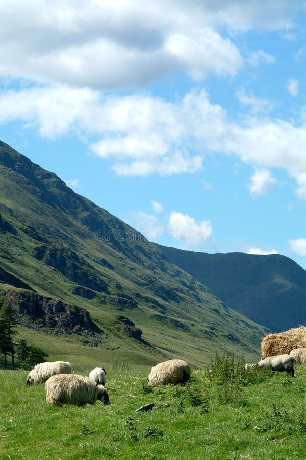 cova幽谷苏格兰 库存图片