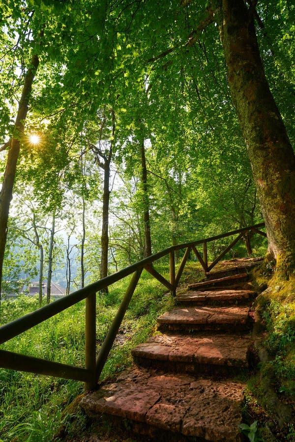 Covadonga lasowi schodki w Asturias Picos Europa obrazy stock