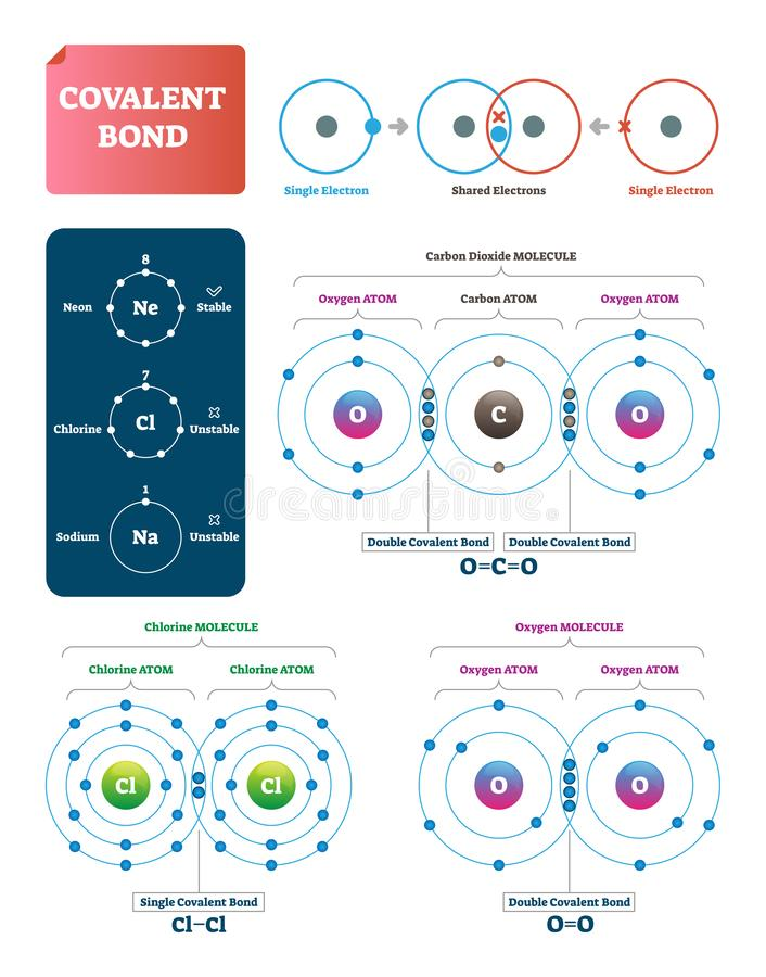 Covalent bond vector illustration. Explanation and example labeled diagram. Covalent bond vector illustration. Process explanation labeled diagram. Molecular stock illustration
