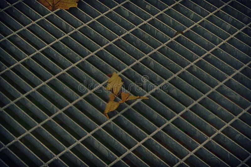 Covata quadrata del metallo in pavimentazione urbana, copertura di botola della fogna con le linee della marcatura e foglia dentr immagine stock