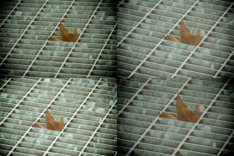 Covata quadrata del metallo in pavimentazione urbana, copertura di botola della fogna con le linee della marcatura e foglia dentr immagini stock libere da diritti