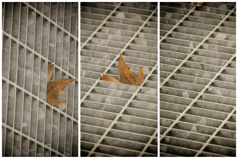 Covata quadrata del metallo in pavimentazione urbana, copertura di botola della fogna con le linee della marcatura e foglia dentr fotografia stock libera da diritti