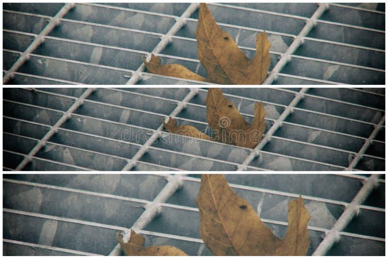 Covata quadrata del metallo in pavimentazione urbana, copertura di botola della fogna con le linee della marcatura e foglia dentr fotografia stock