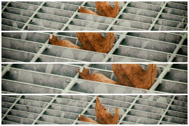 Covata quadrata del metallo in pavimentazione urbana, copertura di botola della fogna con le linee della marcatura e foglia dentr immagini stock