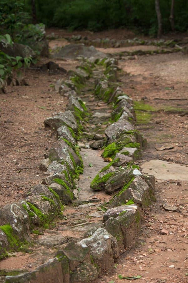 Coverd мха на каменной текстуре в лесе стоковые фото
